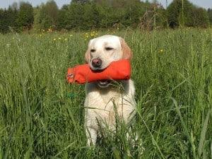 Tips for Good Dog Training